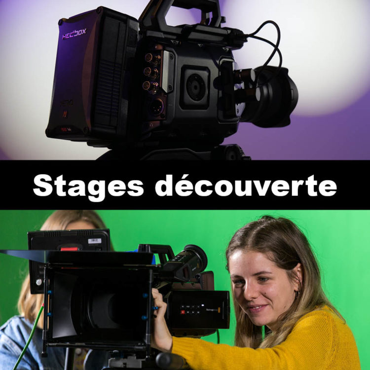 Stages découverte